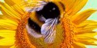 Звітуємо про чергову партію горіхово-медової продукції